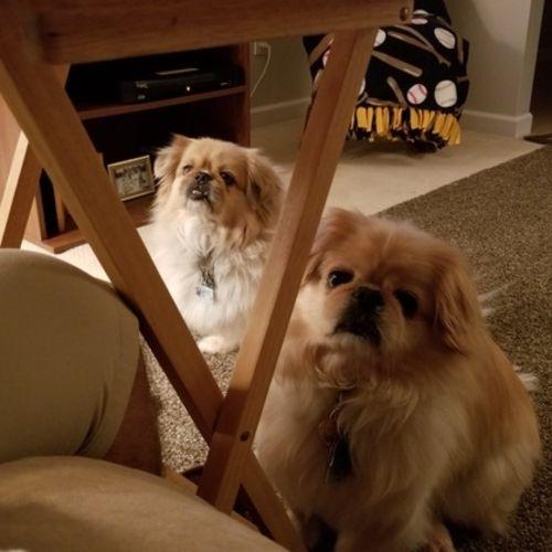Pet Care Job Kimberly Frazee Gallery Image 2
