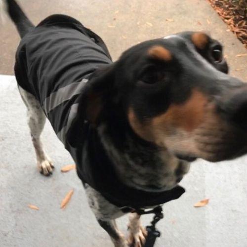 Pet Care Job Joshua de la Garza's Profile Picture