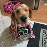 Dog Walker, Pet Sitter in Edgewater