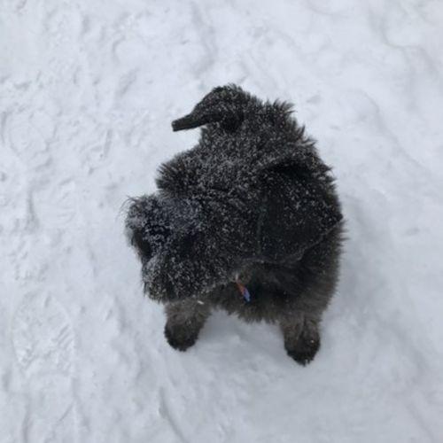 Pet Care Job Cindy Lam's Profile Picture