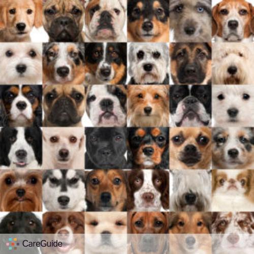 Pet Care Provider Rebecca P's Profile Picture