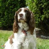 Dog Walker, Pet Sitter in Ashburn