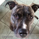 Dog Walker, Pet Sitter in Orlando