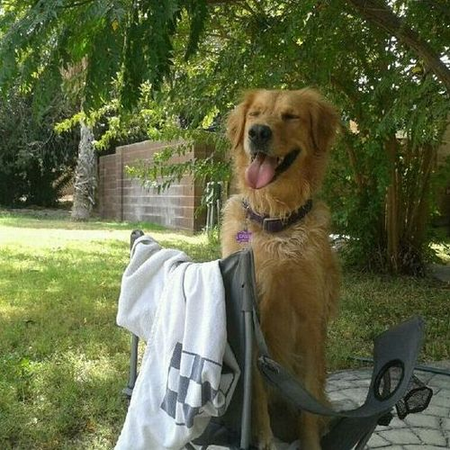 Pet Care Provider Thelma N Gallery Image 1