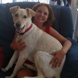I am very reliable and absolutely love dogs! I have 2 of my own! My hours are flexible. I would love to meet your pets!