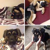 Dog Walker, Pet Sitter in College Station