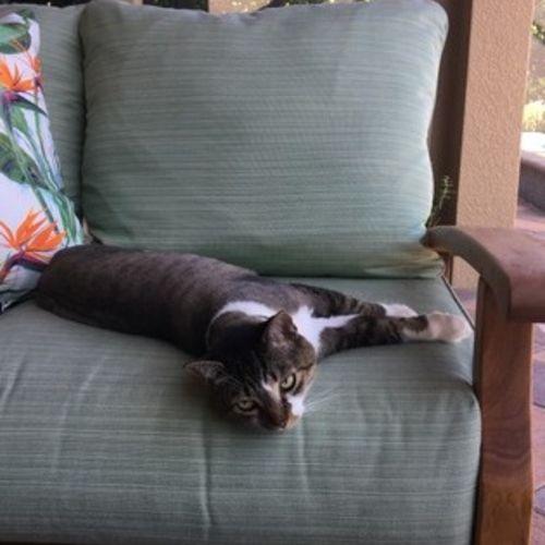 Pet Care Job Linda Miller Gallery Image 2