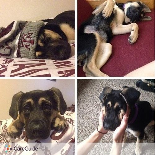 Pet Care Provider Hope Marasigan's Profile Picture
