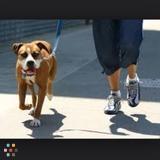 Dog Walker in Brampton