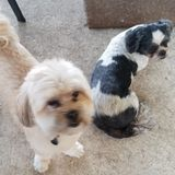 Dog Walker, Pet Sitter in Jacksonville