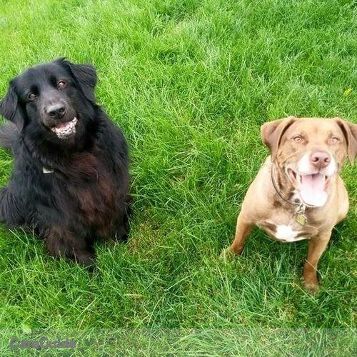 Pet Care Job S C's Profile Picture