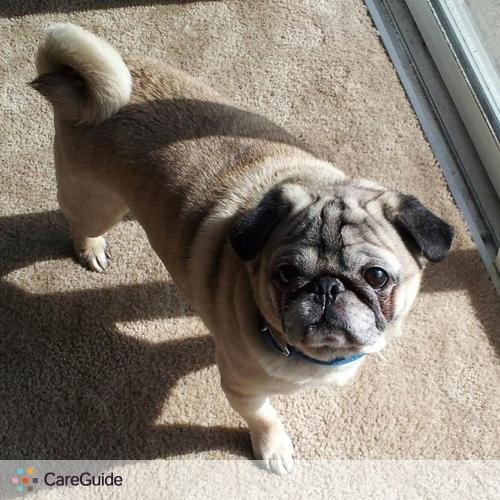 Pet Care Provider Sarina Daugherty's Profile Picture