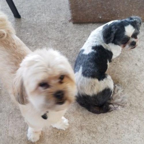 Pet Care Provider Whitney Pierce's Profile Picture