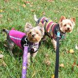 Dog Walker, Pet Sitter in Weatogue