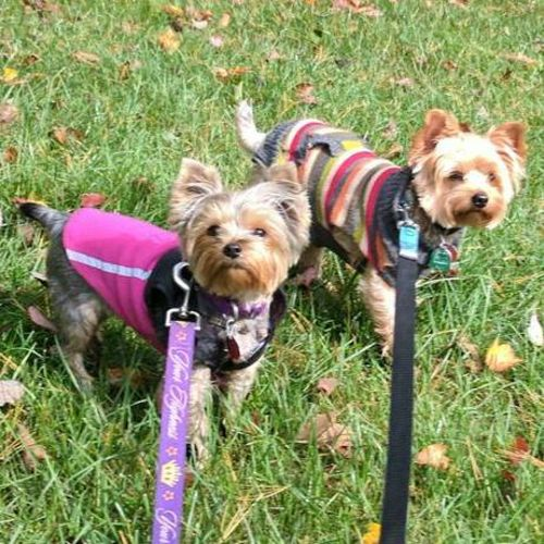 Pet Care Provider Lisa - Insured Business Owner - M's Profile Picture