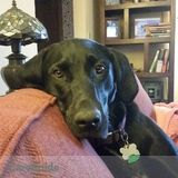 Dog Walker Job in Minneapolis