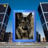 Dog Walker, Pet Sitter, Kennel in Gary