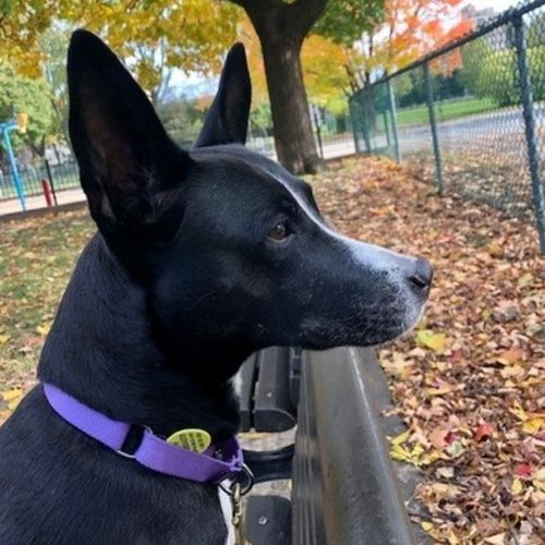 Pet Care Job Annick C's Profile Picture