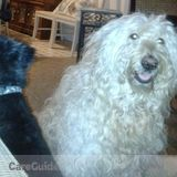 Dog Walker, Pet Sitter in Mentor