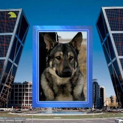 Pet Care Provider Friends Furrever Pet Services, Inc.'s Profile Picture