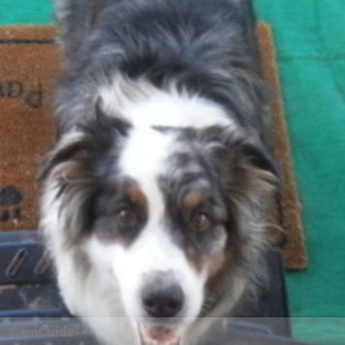 Pet Care Provider Stefanie M's Profile Picture