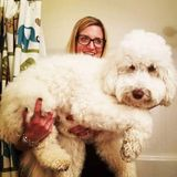 Experienced and compassionate pet sitter for hire.