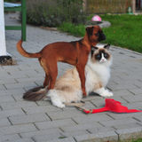 Experienced Caring Pet Sitter