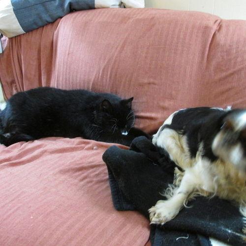 Pet Care Provider Kim Velez Gallery Image 1