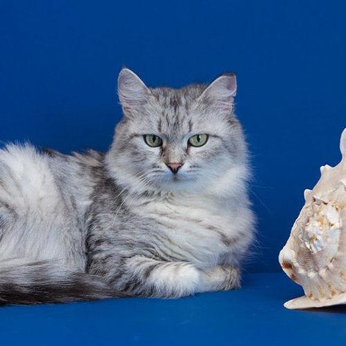 Pet Care Provider Olesia N's Profile Picture