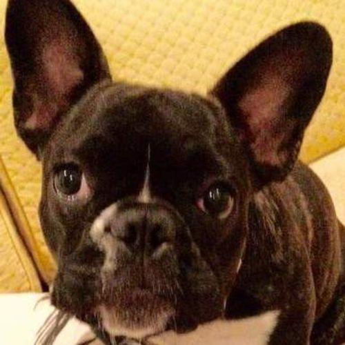Pet Care Provider Cherie B Gallery Image 1
