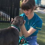 Dedicated Animal Lover Who Has Volunteered At An Animal Shelter For 2 Years And Has 5 Animals Of Her Own :)