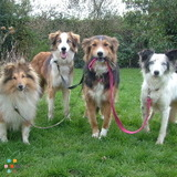 Dog Walker, Pet Sitter, Kennel in Charlotte