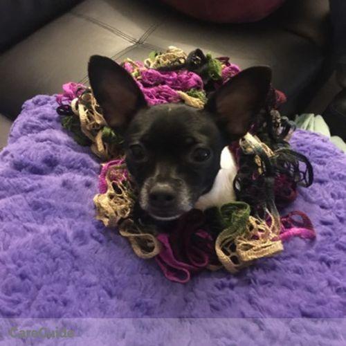 Pet Care Provider Mariana Tuttle's Profile Picture