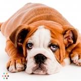 Dog Walker, Pet Sitter in Cochrane
