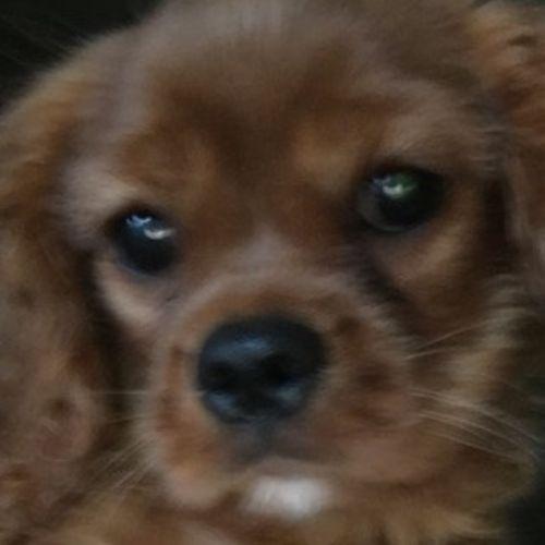 Pet Care Job Dee B's Profile Picture