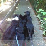 Dog Walker in Mission