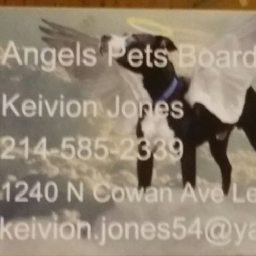 Pet Care Provider Keivion J's Profile Picture