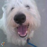 Dog Walker, Pet Sitter in Odessa