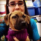 Dog Walker, Pet Sitter in Lakeland