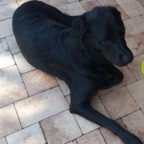 Pet Care Job Elleb Albano's Profile Picture