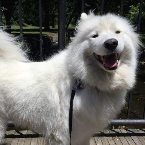 Pet Care Job Neven S's Profile Picture