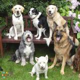 Dog Walker, Pet Sitter in Aurora