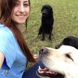 Dog Walker, Pet Sitter in Garner