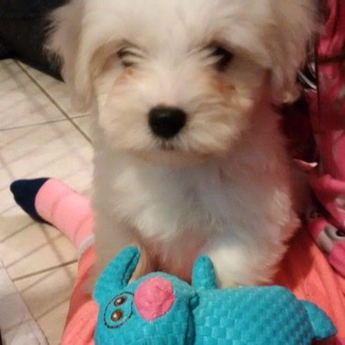 Pet Care Job Lisa Aurora's Profile Picture