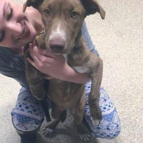 Pet Care Provider Cait Delapine's Profile Picture