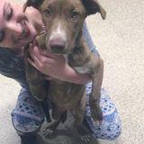 Dog Walker, Pet Sitter in New Paltz