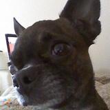Dog Walker, Pet Sitter in Waco