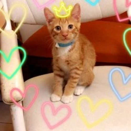 Pet Care Provider Scarlet Maya Gallery Image 2