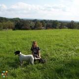 Dog Walker in Flemington