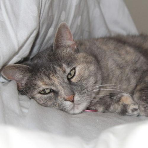Pet Care Provider Lisa K Gallery Image 2